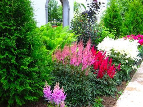 Растения для миксбордера