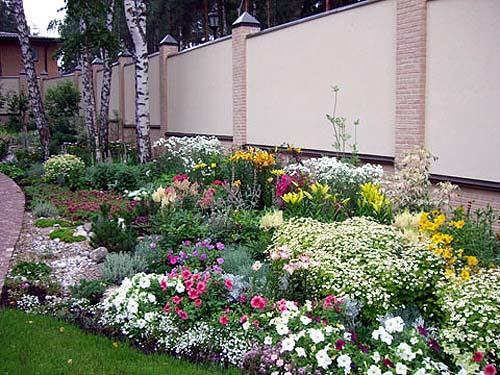 Сочетание цветов при устройстве цветника