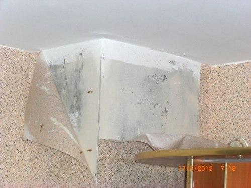 Почему на стене образуется конденсат и как с ним бороться?