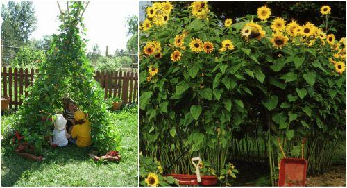 Детский домик из растений