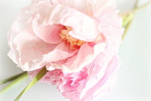 Цветы из гофрированной бумаги своими руками. Фото