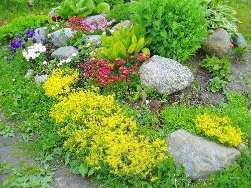 Альпинарий с растениями