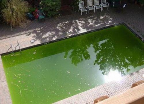 Как избавиться от цветения воды в бассейне?