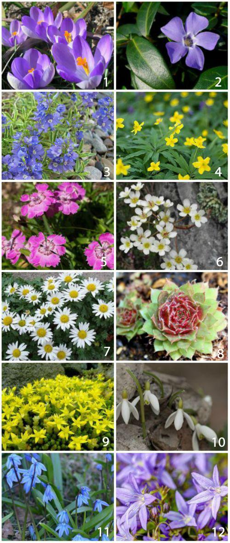 Какие растения посадить на альпийской горке