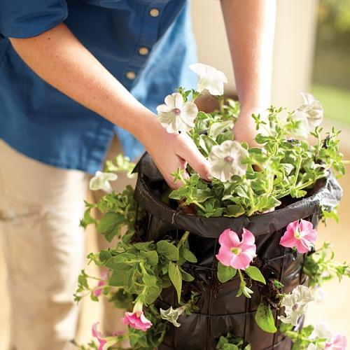 Высадка цветов в клумбу