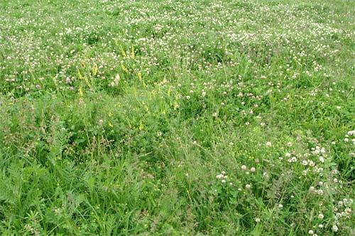 Чем засеять землю от сорняков
