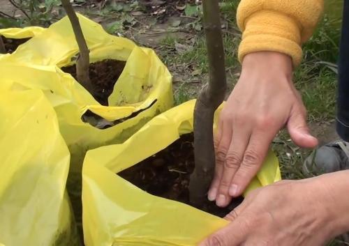 Как правильно посадить деревья осенью? Видео