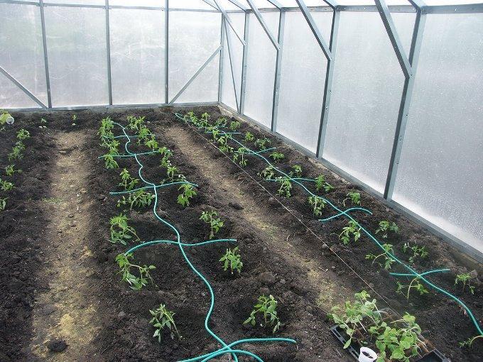 Полив растений в теплице