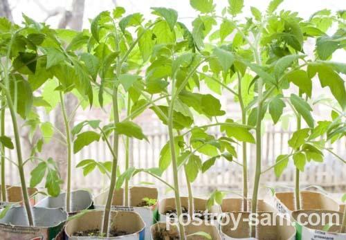 Освещение для выращивания зелени 888