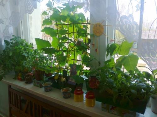 Огород на подоконнике. Как вырастить овощи в квартире?