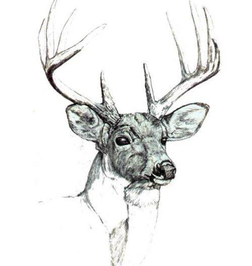 Рисунки животных для выжигания по дереву