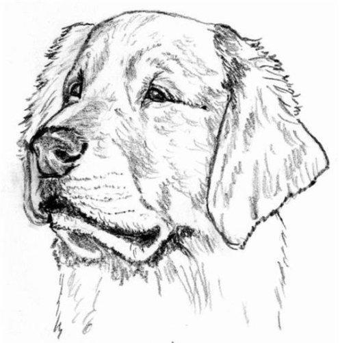 Рисунок пса