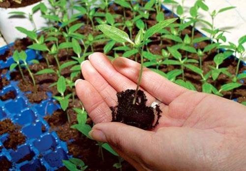 Основные приемы агротехники
