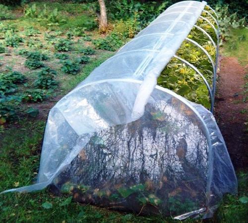 Парник «Огурчик» — малогабаритное сооружение для выращивания овощей и рассады