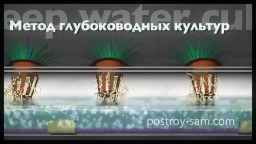 Метод глубоководных культур (Deep Water Culture)