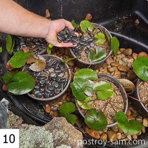 Высадка растений в пруд