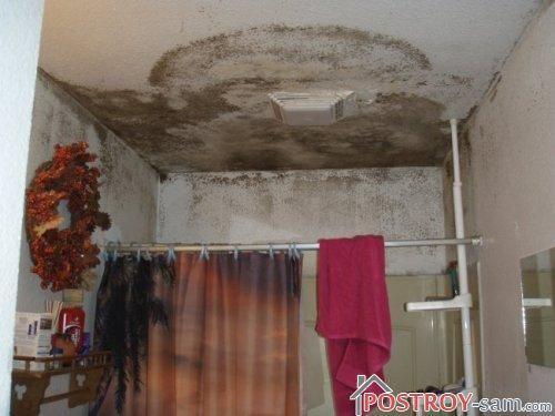 Плесень в ванной: профилактика и способы борьбы с плесенью и грибком