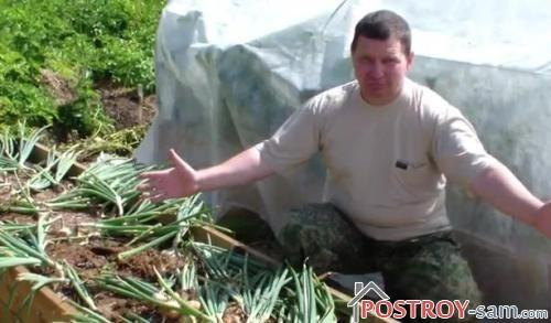 Выращивание лука в домашних условиях на высокой градке