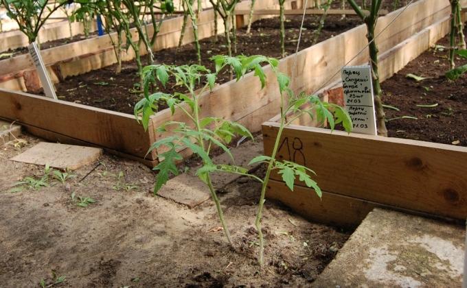 Грядки в солнечном вегетарии