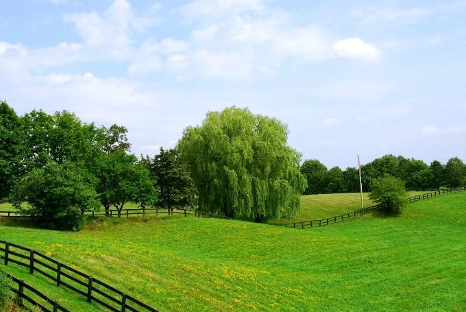 Что нужно знать при покупке земельного участка